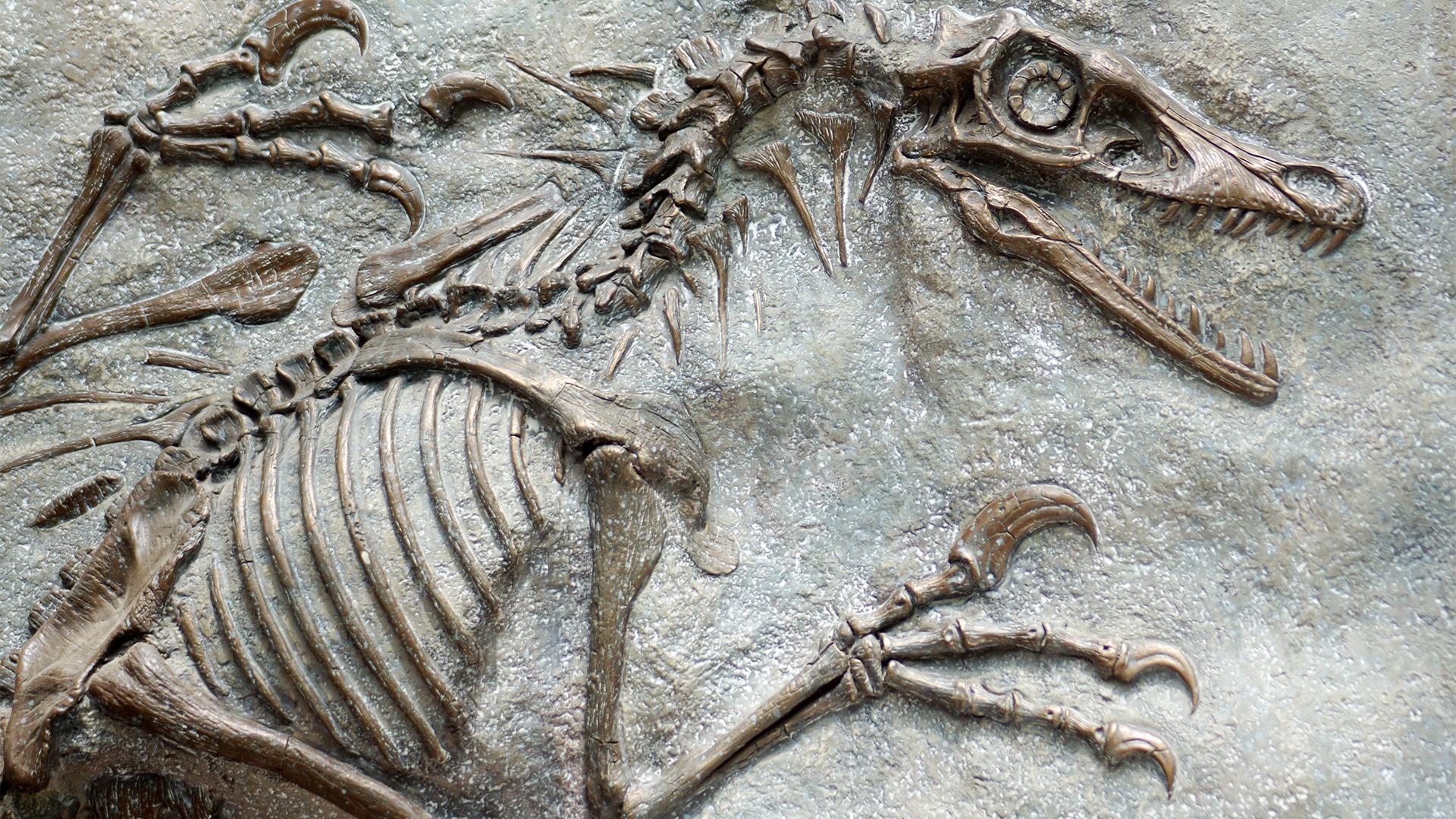 Zelf een fossiel maken
